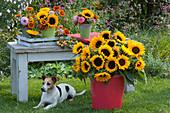 Sträuße mit Sonnenblumen, Zinnien, Dahlien und Zieräpfeln, Hund Zula