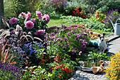 Beet mit Lampionpflanze, Herbstaster, Dahlie, Herbstanemone, Federborstengras, Rotgras 'Red Baron', Fetthenne und Ziersalbei 'Ignition Purple', Hund Zula, silberne Schale mit Flasche und Gläsern