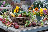 Herbstliches Stilleben mit Äpfeln, Zieräpfeln, gelber Bete 'Burpees Golden' , Zucchini, Sonnenblume und kleiner Strauß aus Ringelblumen, Dahlie und Aster