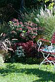 Herbstbeet mit Hortensie, Chinaschilf 'Kleine Silberspinne', Buntnessel, Chili 'Bolivian Rainbow', Scheinsonnenhut Conetto 'Coco' und Federborstengras
