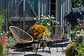Spätsommer-Terrasse mit Sonnenhut 'Goldsturm', Chrysanthemen, Enzianbaum, Gewürztagetes, Rotgras, Bergminze