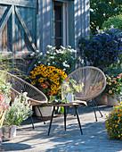 Spätsommer-Terrasse mit Sonnenhut 'Goldsturm', Chrysantheme, Enzianbaum, Gewürztagetes, Bergminze und Dahlie