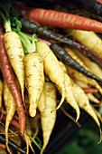 Verschiedenfarbige Karotten