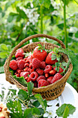 Raspberries and strawberries in a basket
