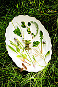 Wild herbs on a white plate
