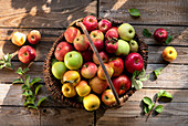 Different kinds of apples in a basket on a wooden table in the garden
