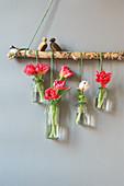 Glasflaschen mit Tulpen als Wanddekoration an Ast gehängt