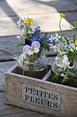Kleine Frühlingssträußchen mit Hornveilchen, Vergißmeinnicht, Wiesenschaumkraut und Butterblumen