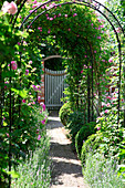 Gartenweg unter Rosenbogen mit Kletterrosen, im Beet Lavendel und Buchs