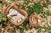 Körbe mit frisch gesammelten Pilzen