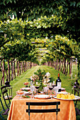A Mediterranean laid table under grapevines