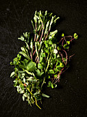 Pimpinelle, lady's mantle, daisy, wild watercress