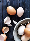 Fresh eggs and egg shells