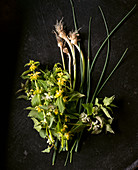 Yellow archangel and wild leek