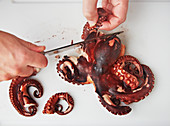 Octopus legs being cut off
