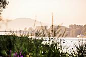 Rheinaue Park, Bonn, North Rhine Westphalia, Germany