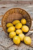 Lemons in a wicker basket