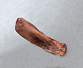 Raw beef spleen