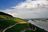 Weinlandschaft, Weingut Wegeler, Rheingau, Deutschland