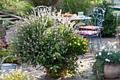 Großer Kübel mit Strauchbasilikum, Wandelröschen, Kapkörbchen und Federborstengras, Gartennelke Devon Cottage 'Blush' mit Silber-Wermut in Terracotta, Sitzgruppe