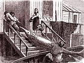 Landing a sturgeon, 19th century illustration