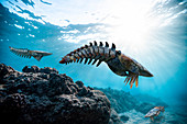 Aegirocassis prehistoric marine arthropod, illustration
