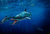 Edestus prehistoric shark, illustration