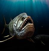 Xiphactinus prehistoric fish, illustration