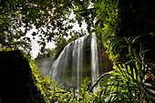 Taki Waterfalls and jungle, Palau, Micronesia
