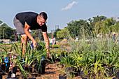 Planting public garden, Detroit, Michigan, USA