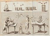 Galvani's ox experiments, illustration