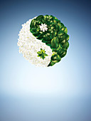 Illustration of leaves in yin yang shape