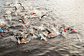 Triathletes swimming in water