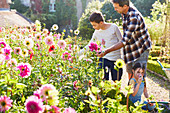 Father and son picking flowers in garden