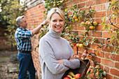 Portrait mature woman harvesting apples in garden