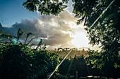 Tranquil sunset over trees Kiama Australia