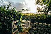 Sunshine over tranquil idyllic garden and chicken coop