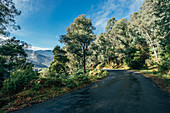Road through sunny green trees
