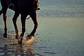 Horse running splashing in ocean surf