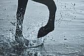 Close up horse hoof splashing in water