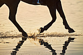Horse hooves splashing in sunset ocean surf