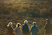 Group watching elephants on sunny wildlife reserve