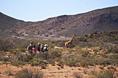 Group watching giraffe sunny wildlife reserve South Africa
