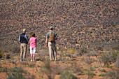 Group watching giraffes on sunny wildlife reserve