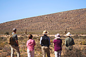Group watching giraffes in distance South Africa