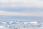 Sunny polar ice melt Greenland