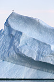 Bird perched on top of tall majestic iceberg Greenland