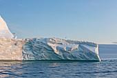 Birds gathering on top of iceberg on