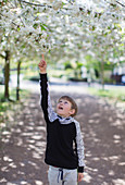 Boy reaching for apple blossoms on tree in park