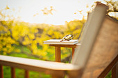 Book and eyeglasses on lawn chair in sunny garden